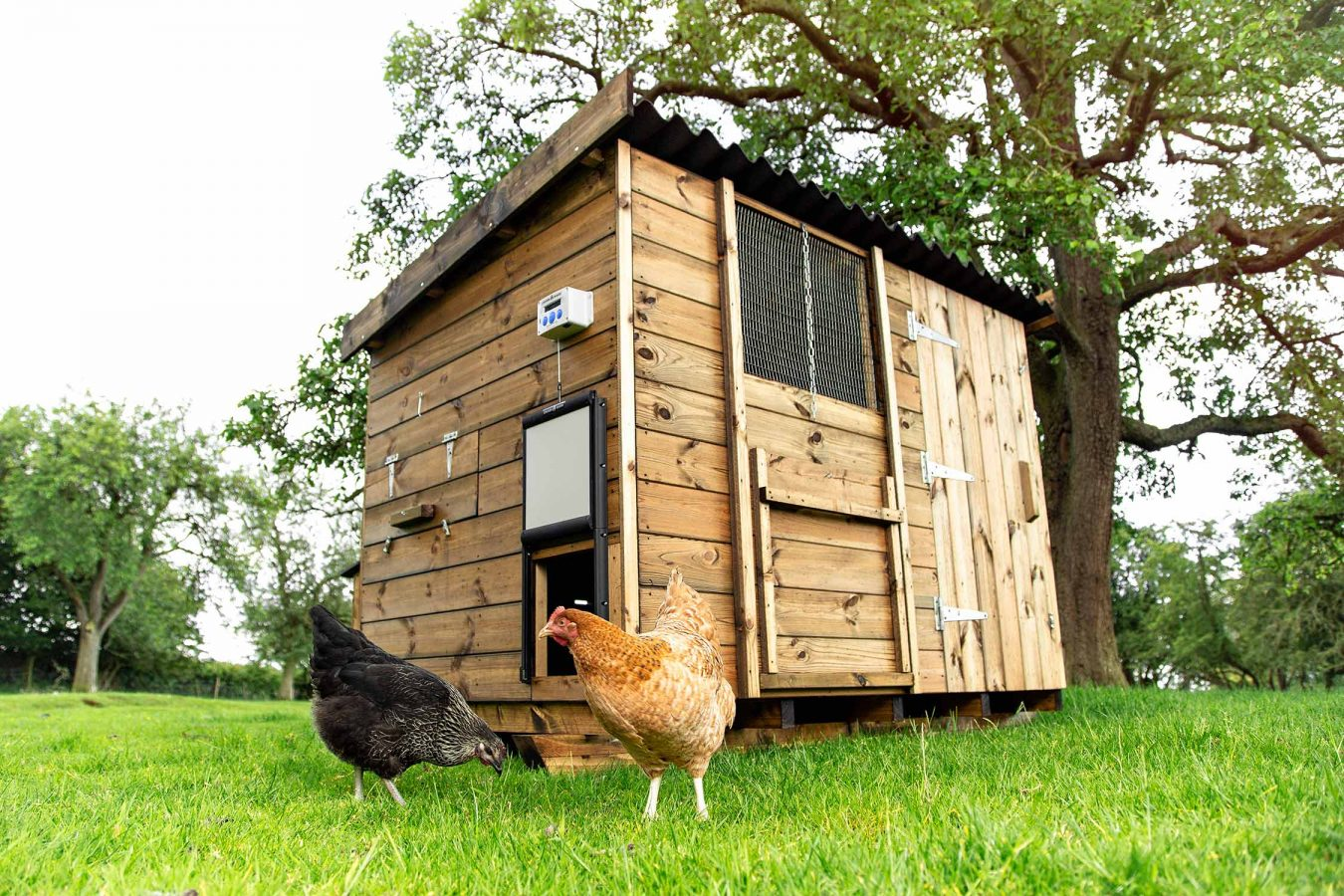 location-chicken-coop-product-photography-for-chickenguard